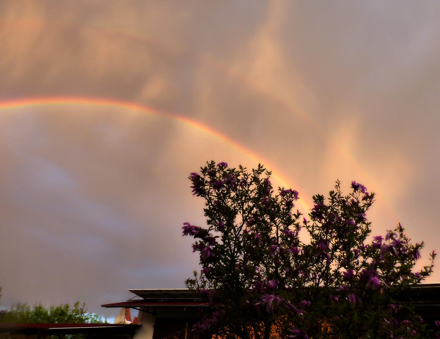 Regenbogen über meiner Magnolie