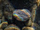 Regenbogen unter Wasser