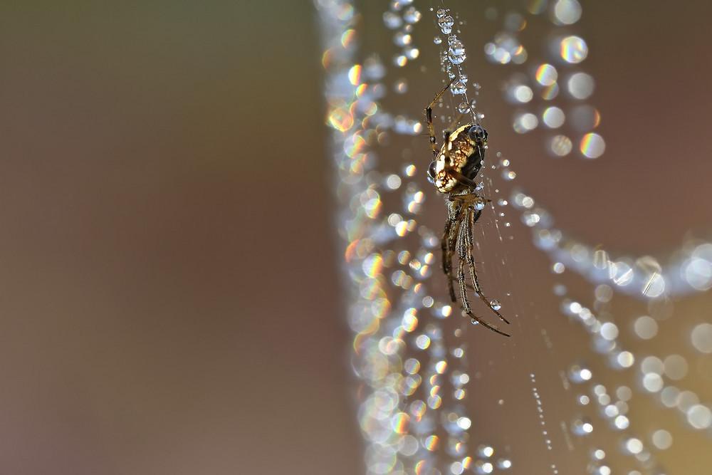 Regenbogenfarbenspinnennetz