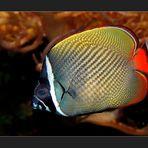 Regenbogenfisch oder was?