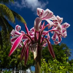 regenfreies florales