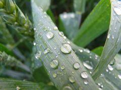 Regenlied