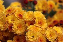 Regennasse Blüten...