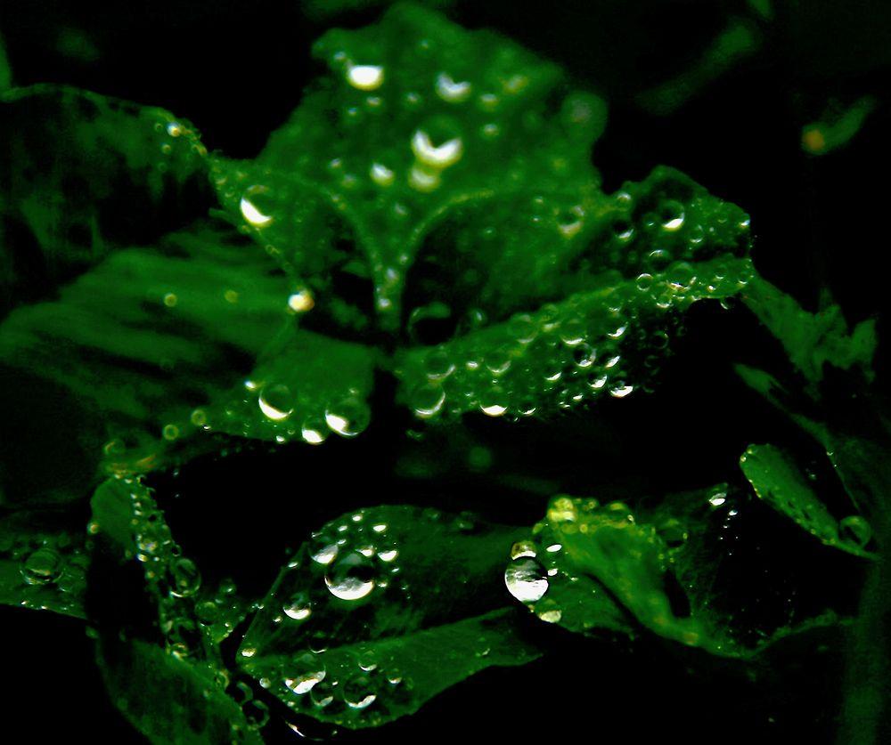 Regenperlen