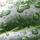 Regenperlen . . .
