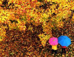Regenschirmzwerge