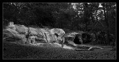 - Regensteiner Sandsteinhöhlen -