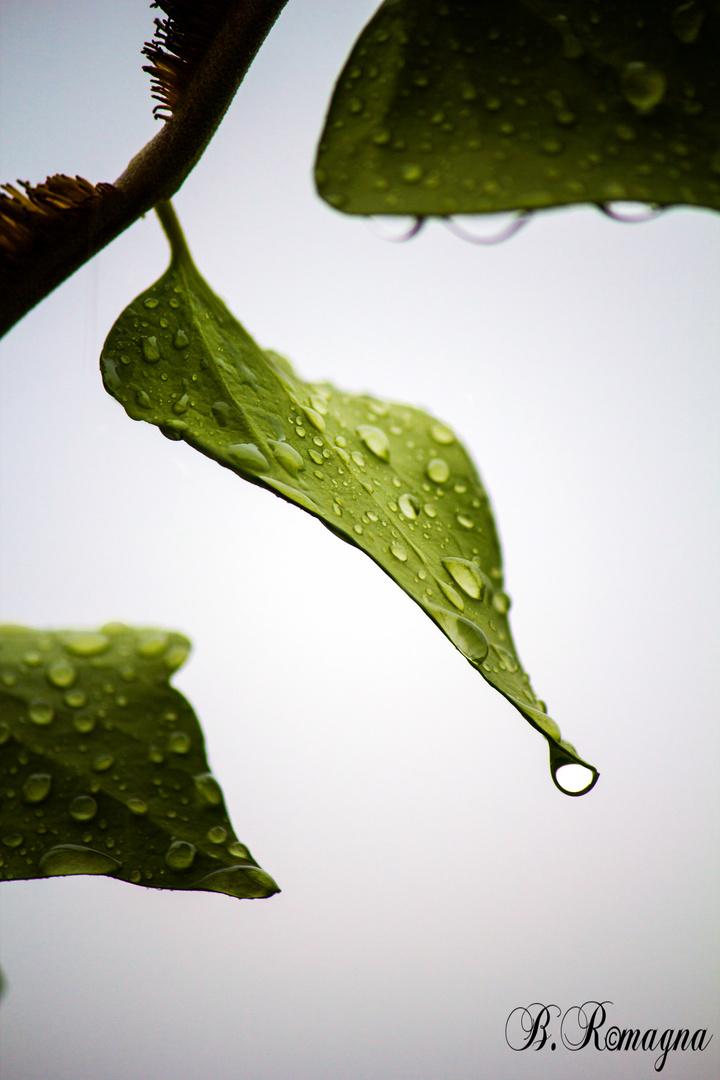 Regentag....