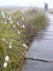 Regentag im Moor