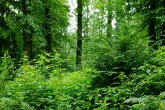 Regentag im Sommerwald