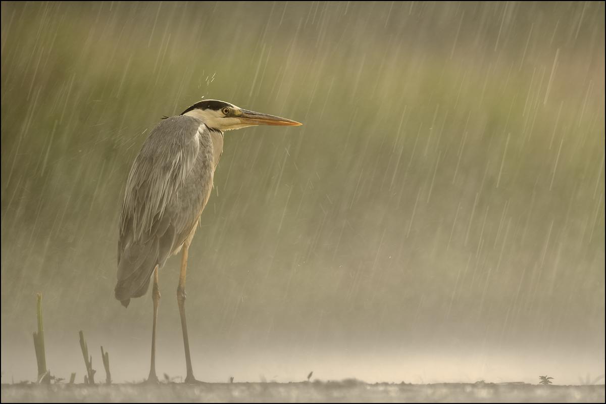 Regentage mag ich nicht