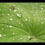 Regentropfen auf Reise