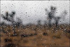 Regentropfen die an mein Fenster klopfen