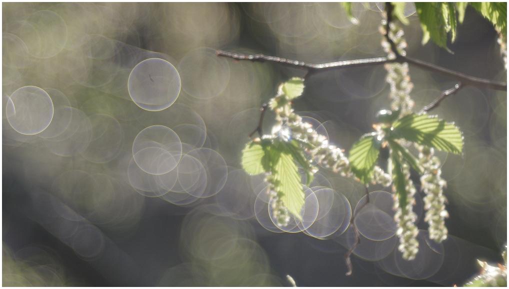 Regentropfen im Sonnenlicht