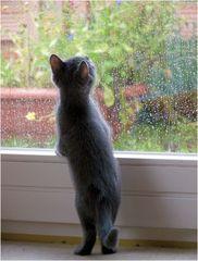 regen.tropfen.gucken...