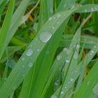 Regentrpfen (gotas de lluvia)