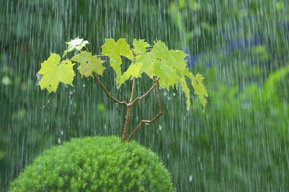 Regenwäldchen