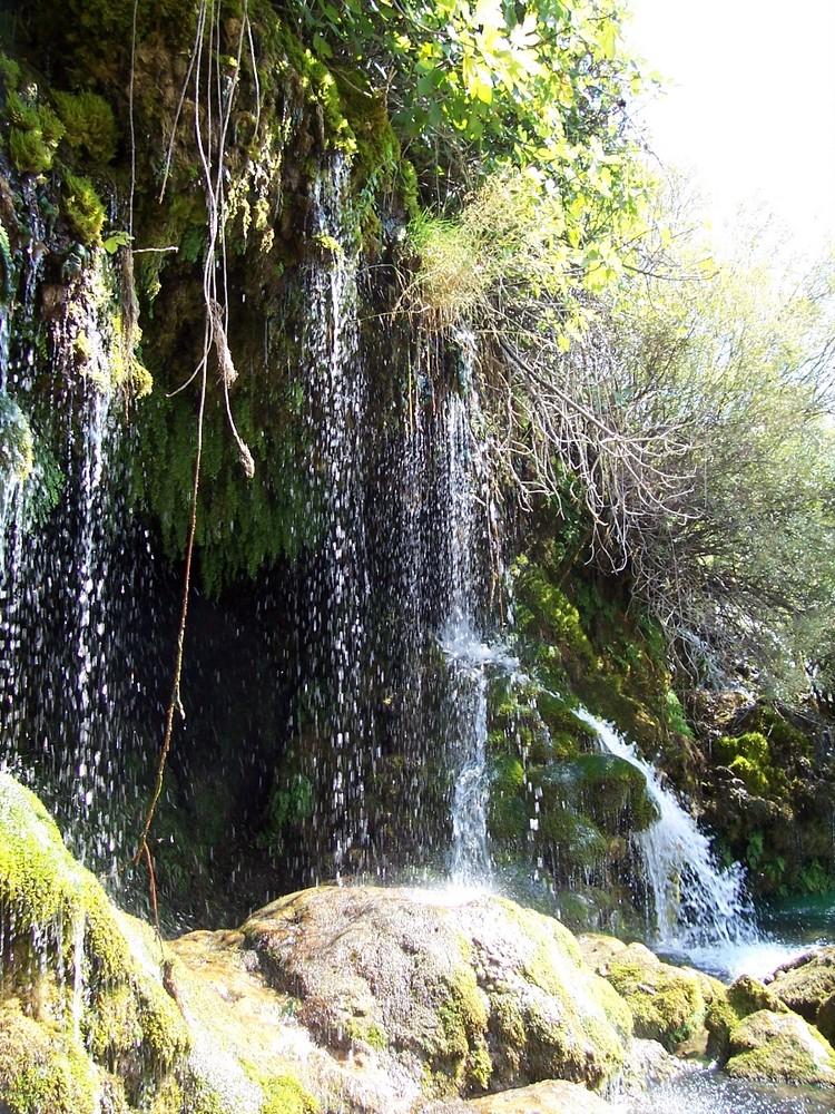 Regenwald.....