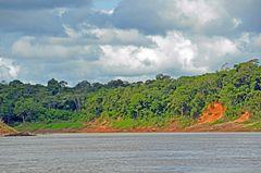 Regenwald am Rio Tambopata