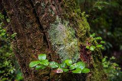 Regenwald  auf Vancouver Island  DSC_1185
