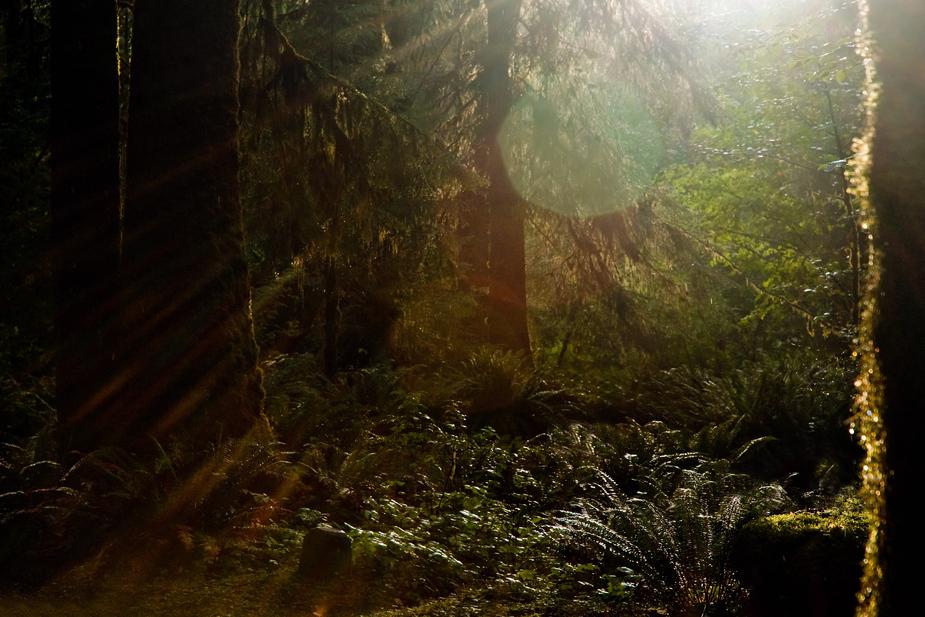 Regenwald im Olympic National Park - Washington State - USA