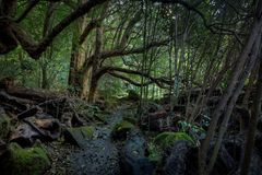 Regenwald in Coromandel