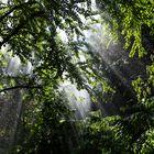 Regenwald mitten in Landau