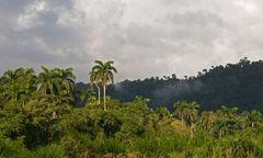 Regenwaldgeheimnisse