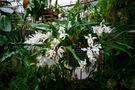 Regenwaldhaus Mörse 71 von Andreas Klinner