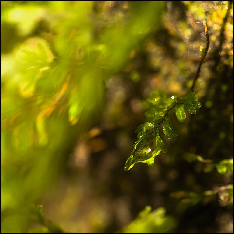 regenwaldimpression