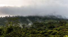 Regenwaldnebel