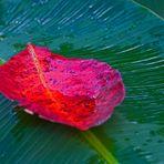 regenwaldregenblätter