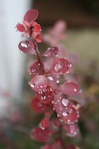 regnerischer nachmittag