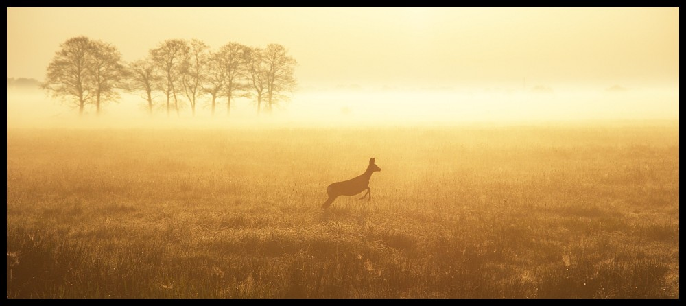 Reh im Morgennebel
