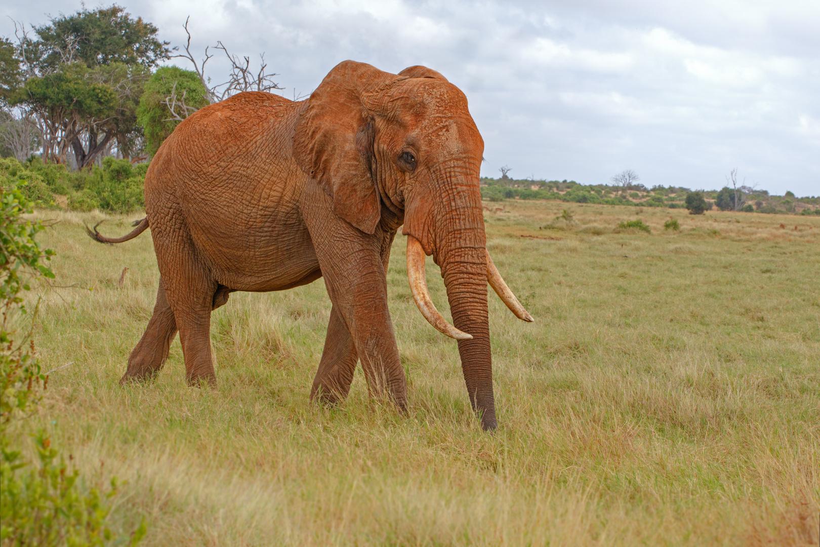 """Reich der """"roten Elefanten"""""""