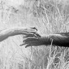 Reich mir die Hand