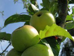 Früchte+Beeren