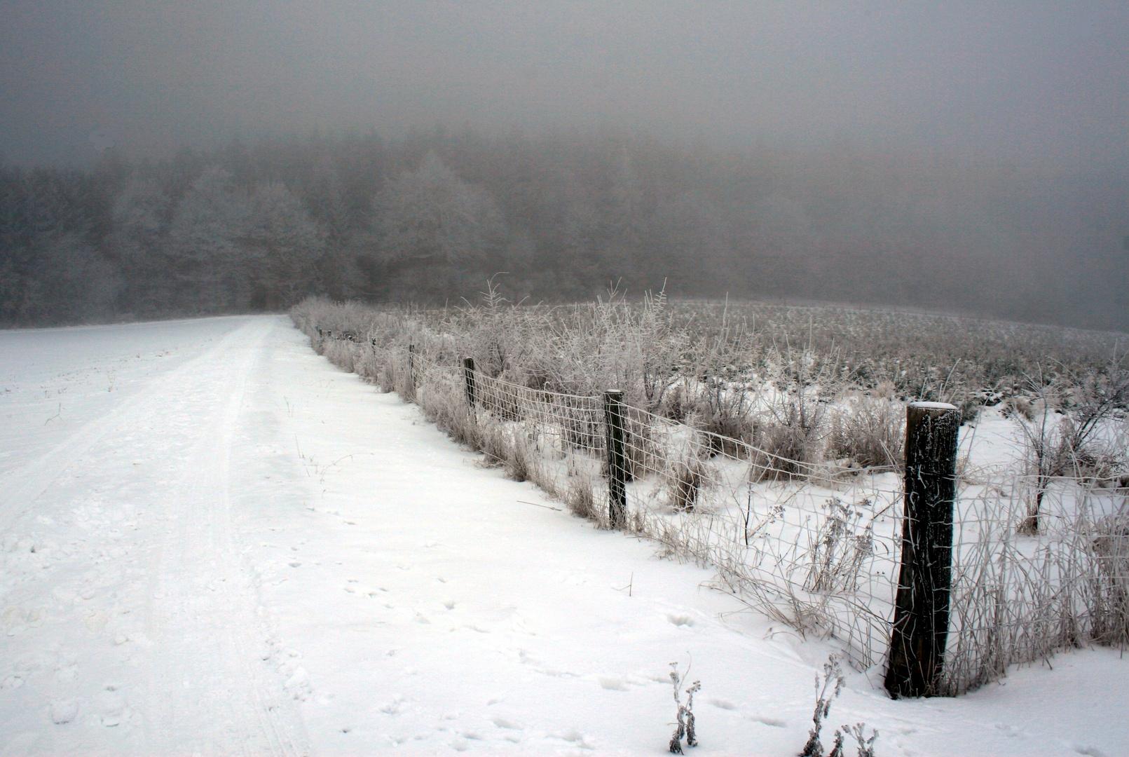 reif & nebel