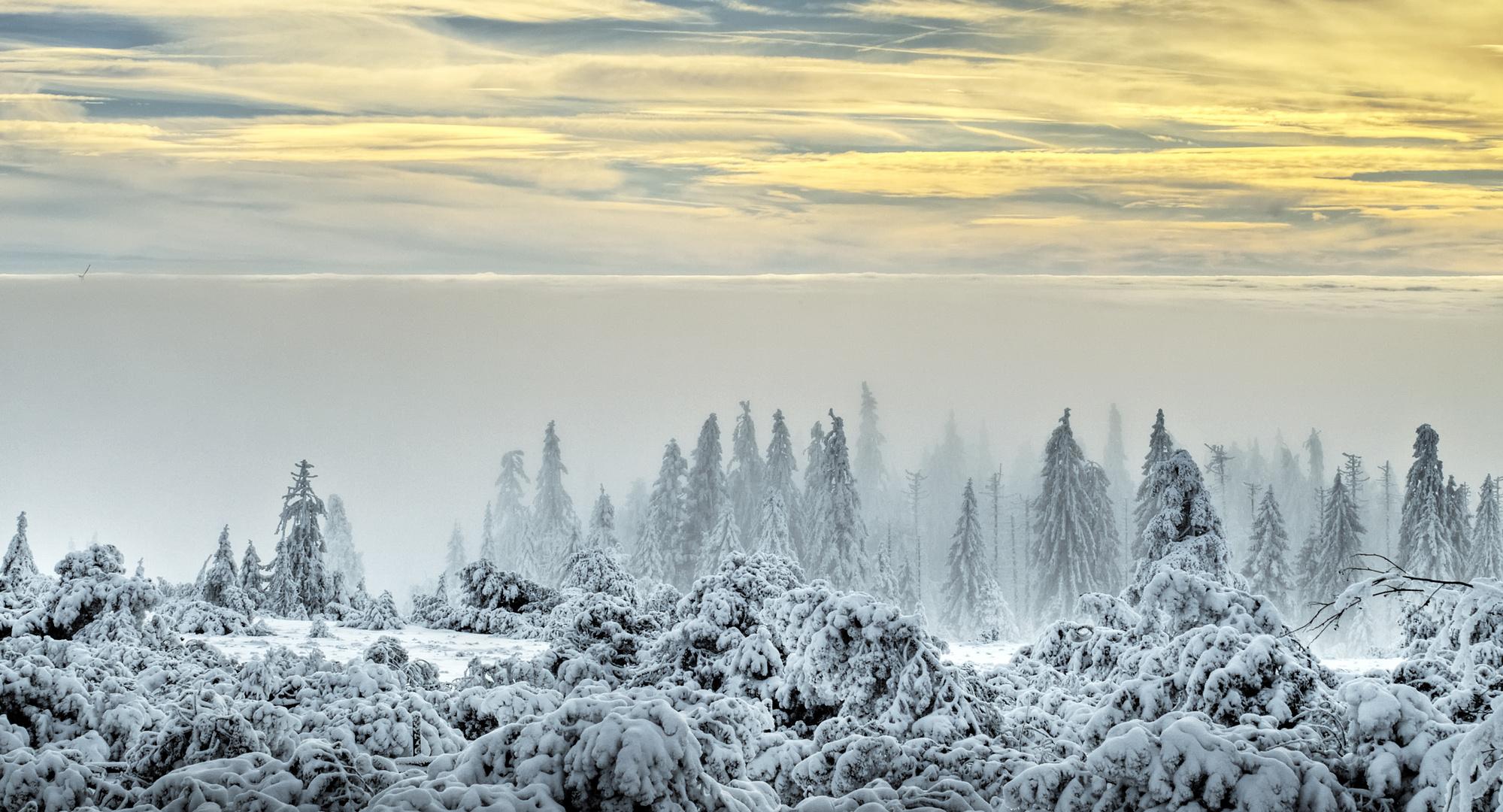 Reif und Nebel