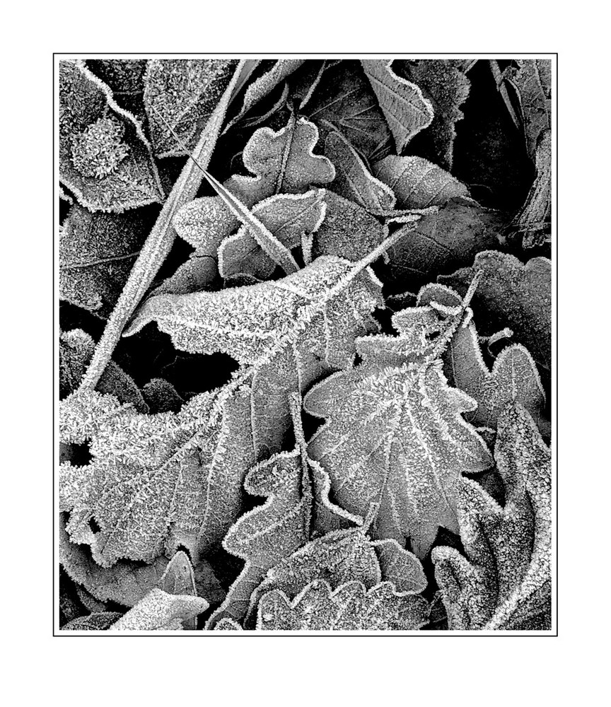 Reife Blätter II
