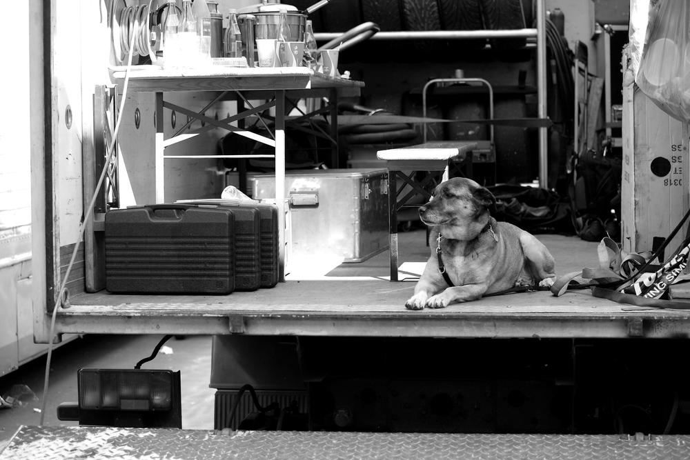 Reifenhund