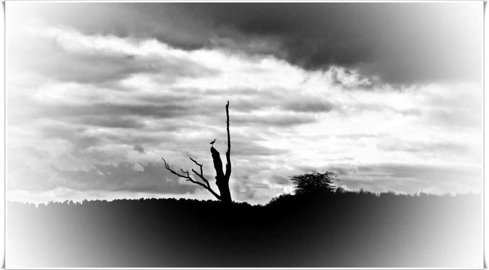 Reiher auf Baum