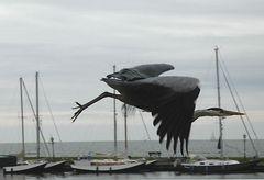 Reiher auf dem Abflug im Hafen von Volendam