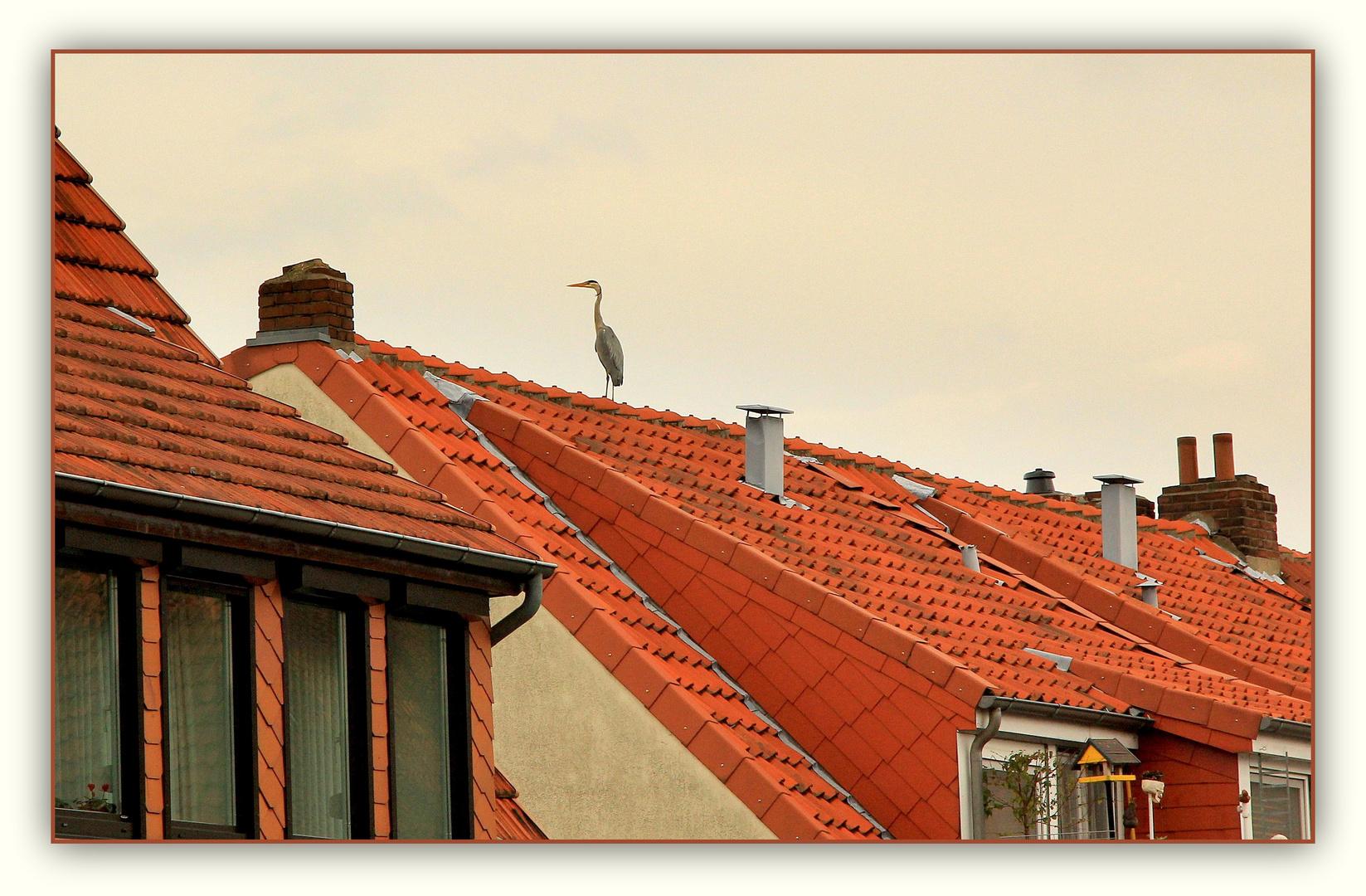 Reiher auf dem Dach