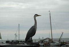Reiher im Hafen von Volendam