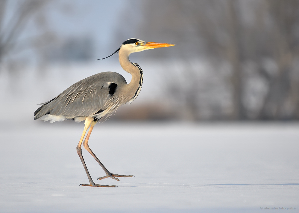 Reiher on Ice