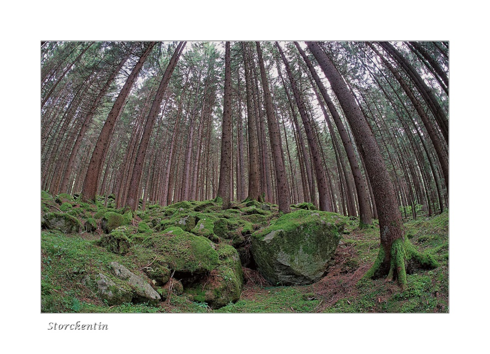 Reinbacher Wald
