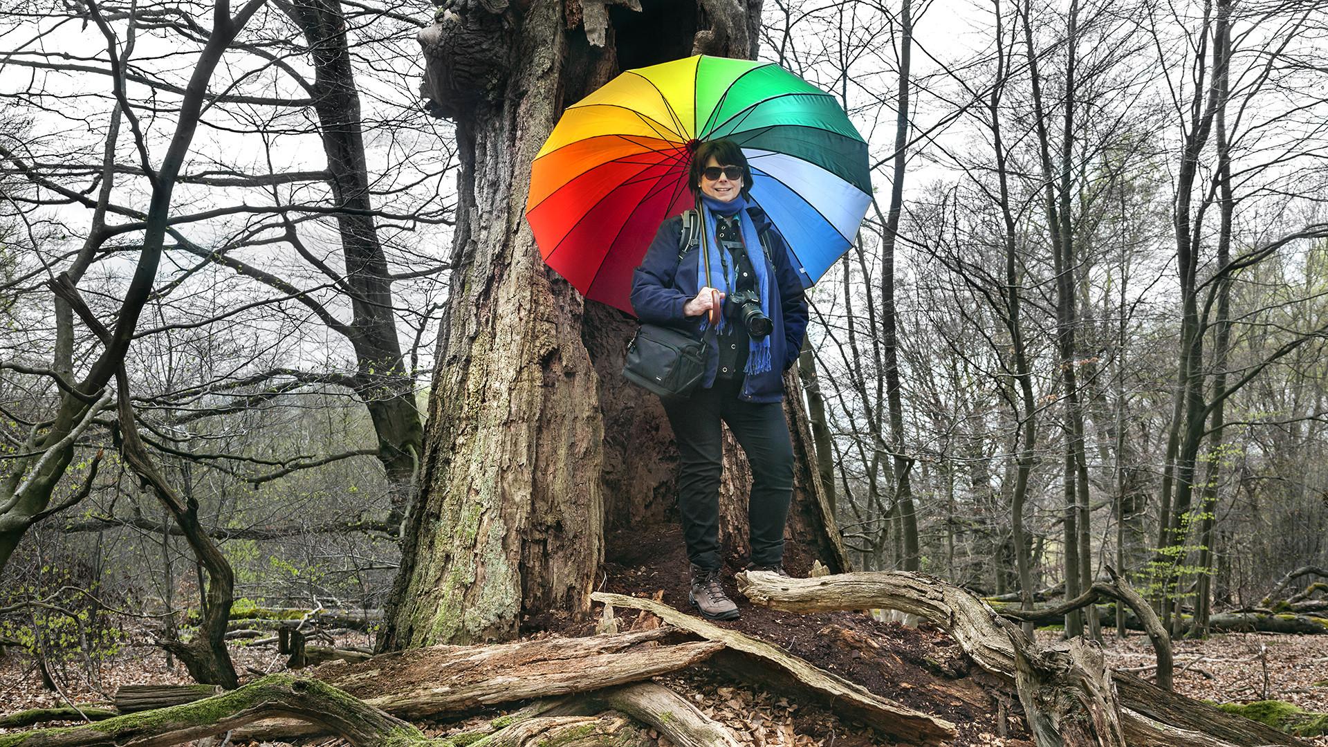 Reinhardswald: 200 bis 600 Jahre alte Huteeichen