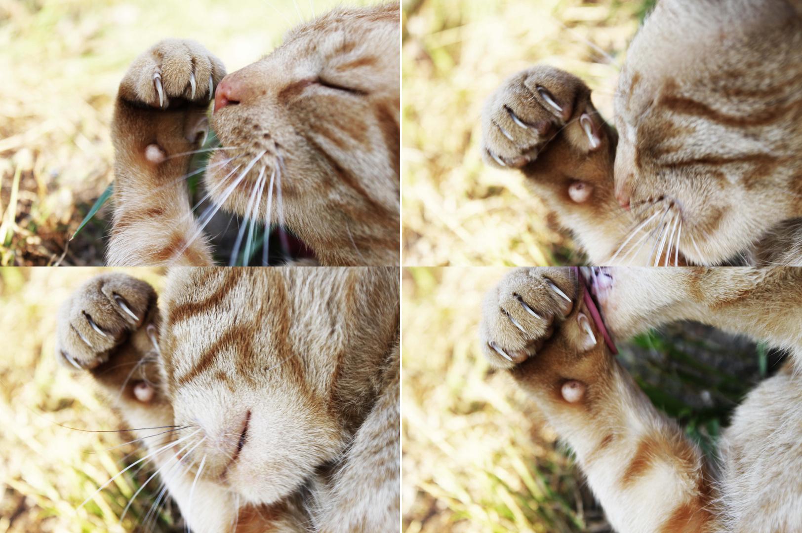 reinheit der katze