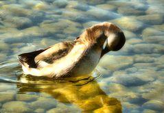 Reinliche Ente